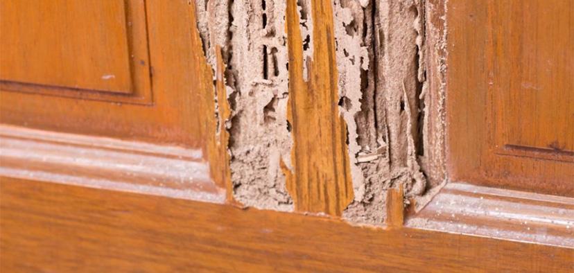 Termite Damage Repair
